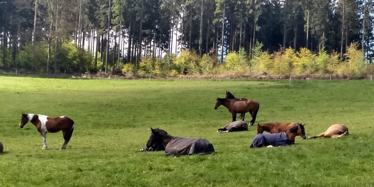 Reiterhof Goesingen Weide mit Pferden