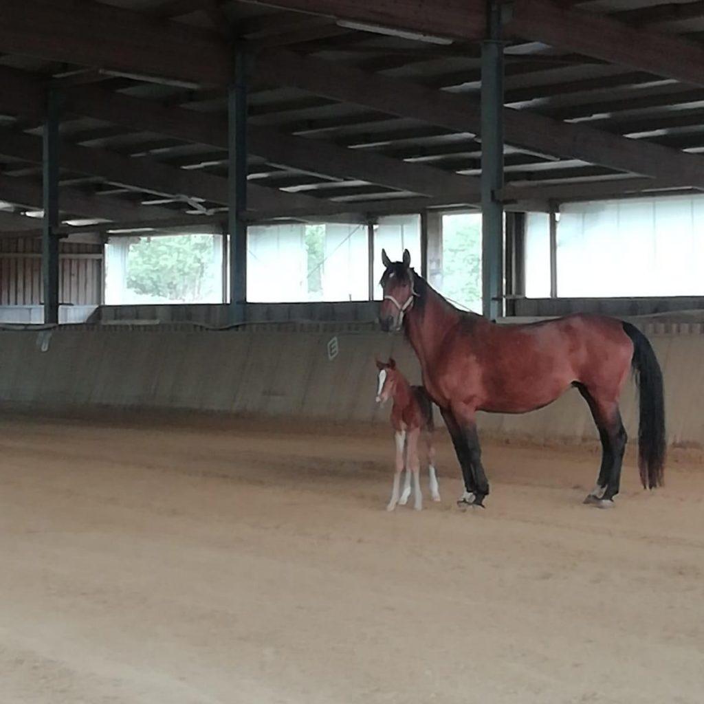 Reiterhof Goesingen Reithalle mit Pferden