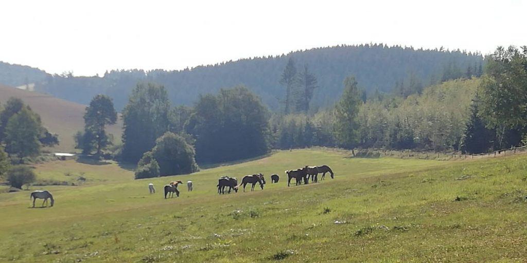 Reiterhof Goesingen Leistungen für Pferde