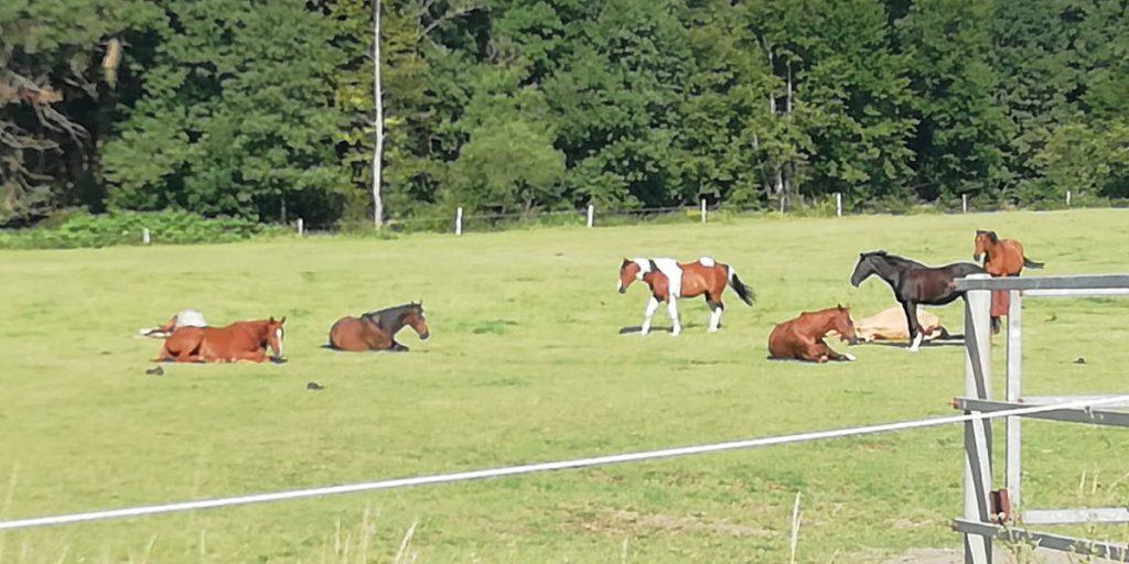 Reiterhof Goesingen Weiden und Pferde