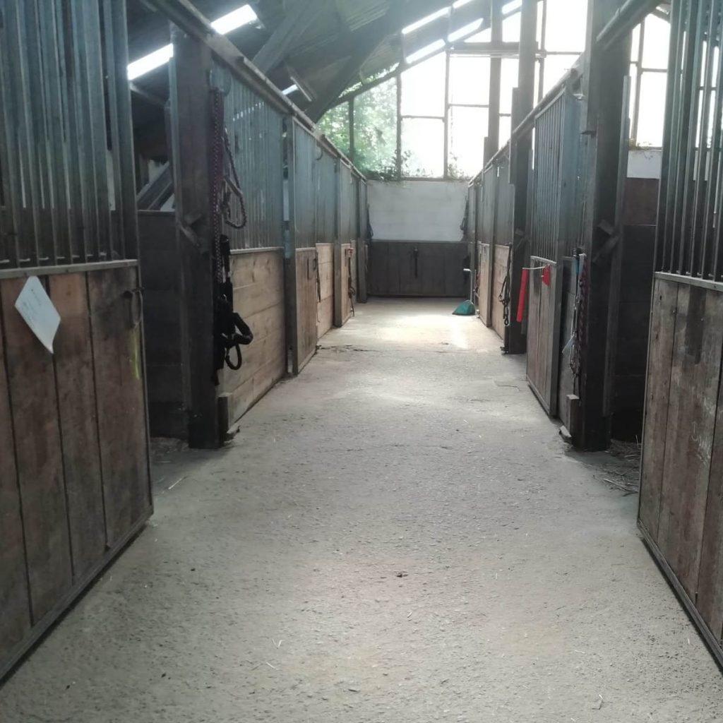 Reiterhof Goesingen Pferde-Boxen
