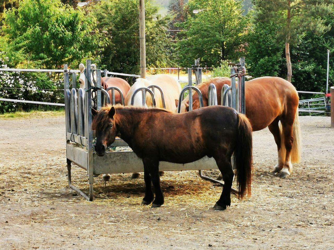 Pferde-Reiter-Hof Gösingen Anlage