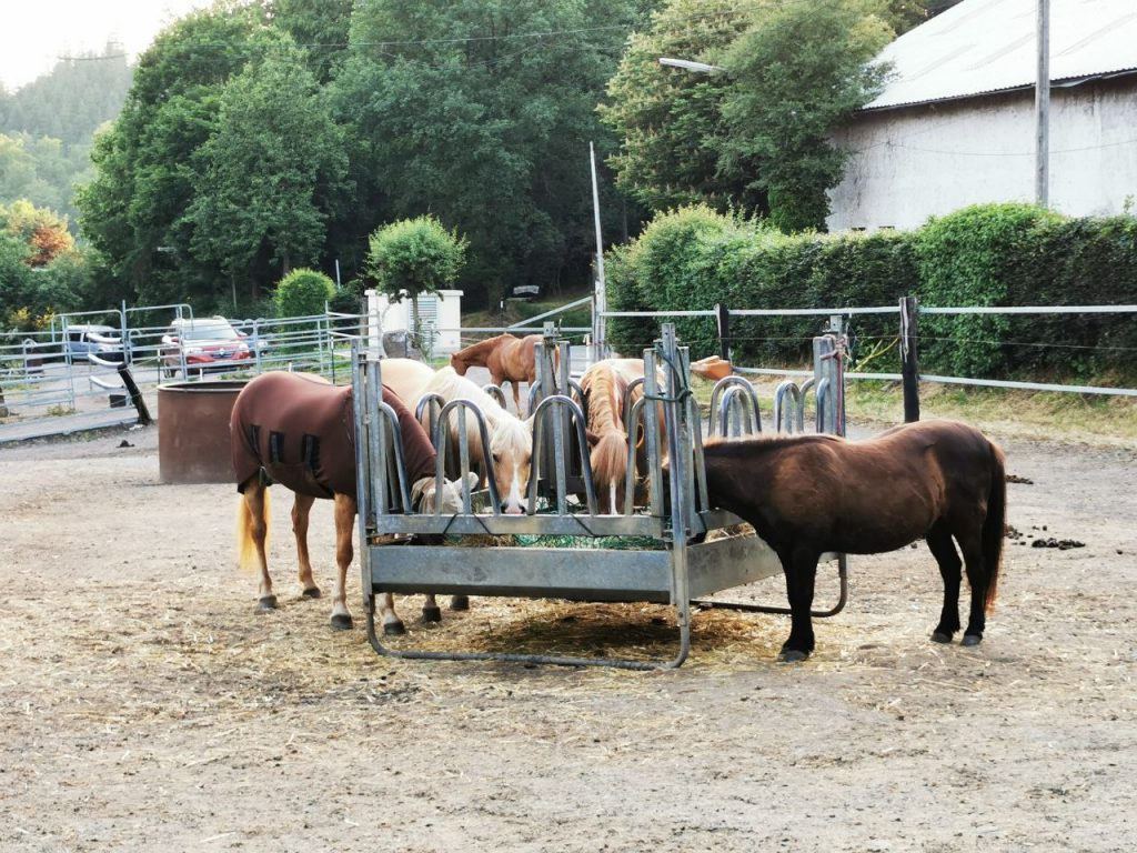 Reiter-Pferde-Hof Gösingen Futterraufe
